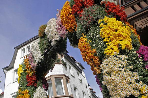 Chrysanthema-Busfahrt-viandi